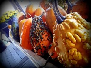 Autumn at the Amish market