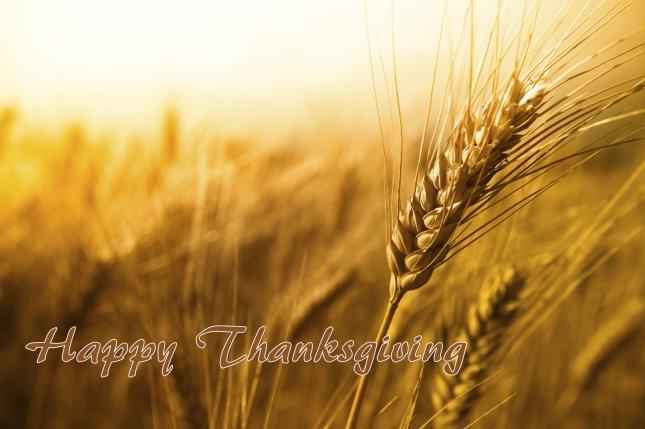 Thanksgiving wheat